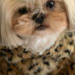 Profile photo of smarto